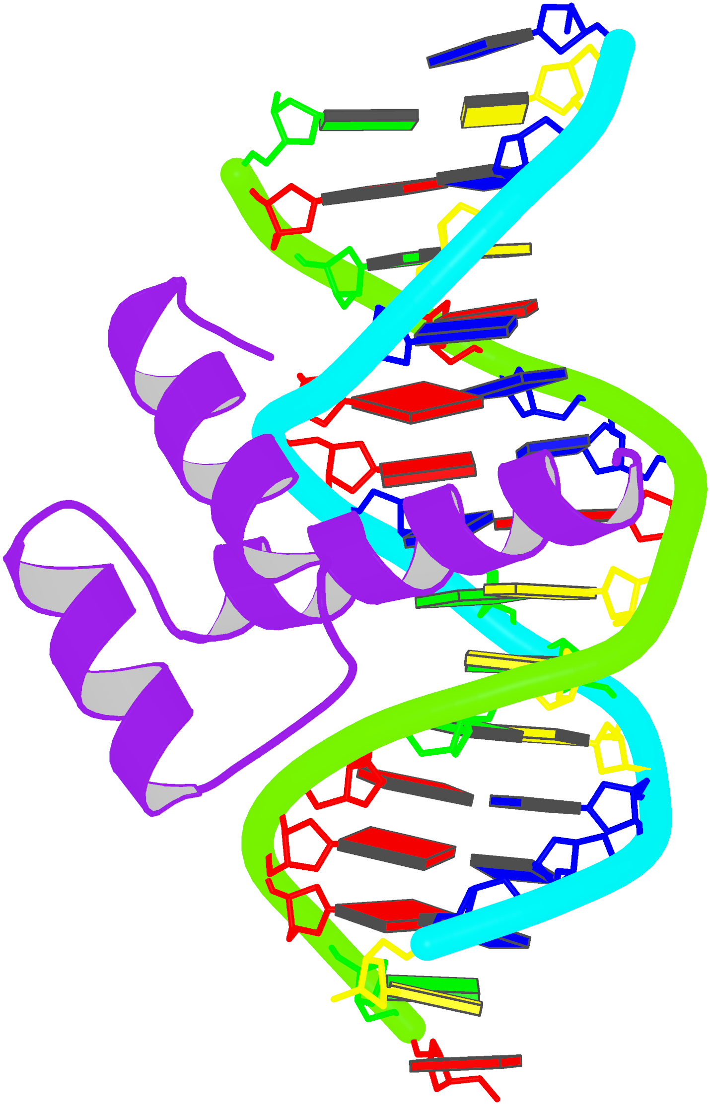 complex of DNA with the Antennapedia homeodomain (9ant)